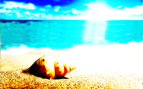Exercise seashells 1